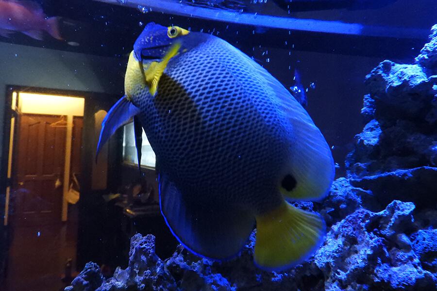 画像:海水魚の水槽