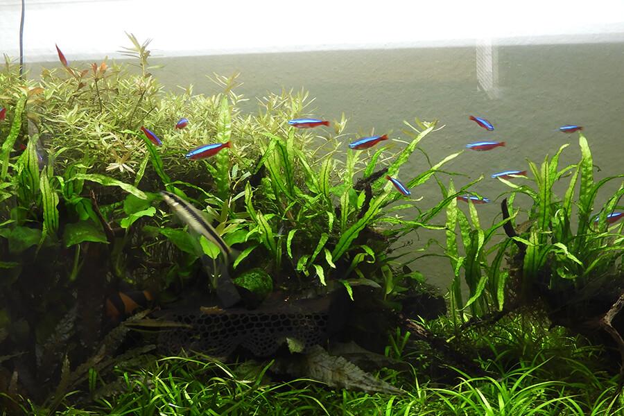 画像:淡水魚の世界事例