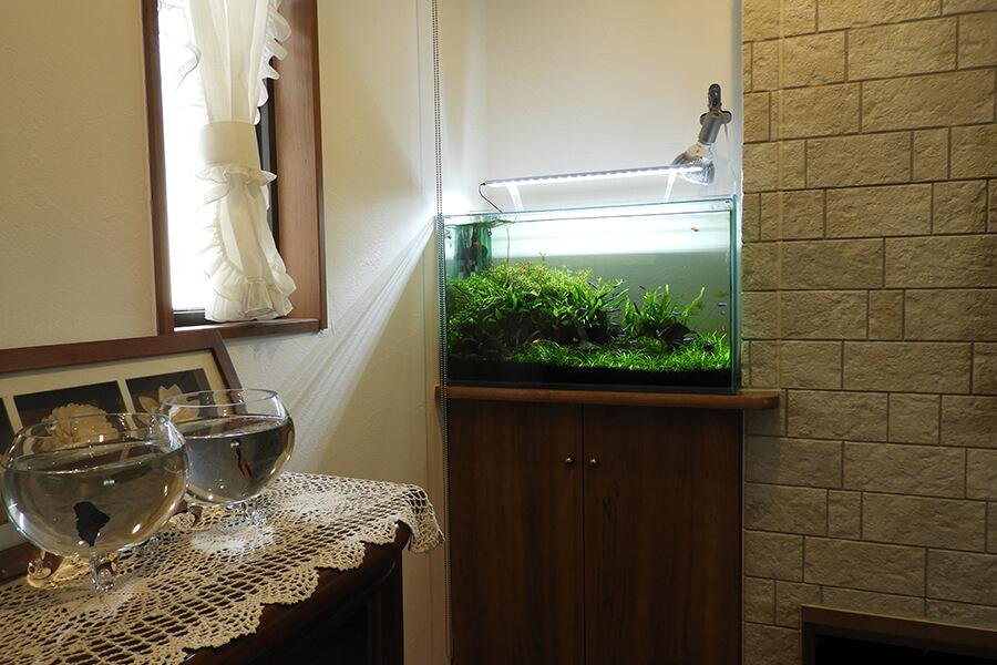 画像:淡水魚の水槽