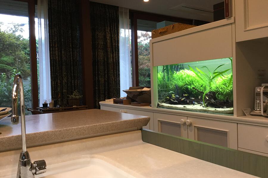 画像:淡水魚の水槽|横浜市の個人宅様